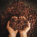 Café Mexa: cielo recién molido